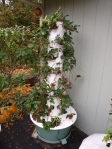 My Strawberry Tower Garden on Halloween Day.