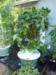 Tower Garden in full production summer 2013