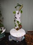 Tower Garden growing outdoor winter vegetables