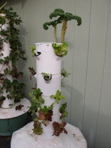 Tower Garden cleaning and growing a new crop for the winter months.