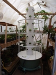 Tower Garden ready for the winter in my greenhouse