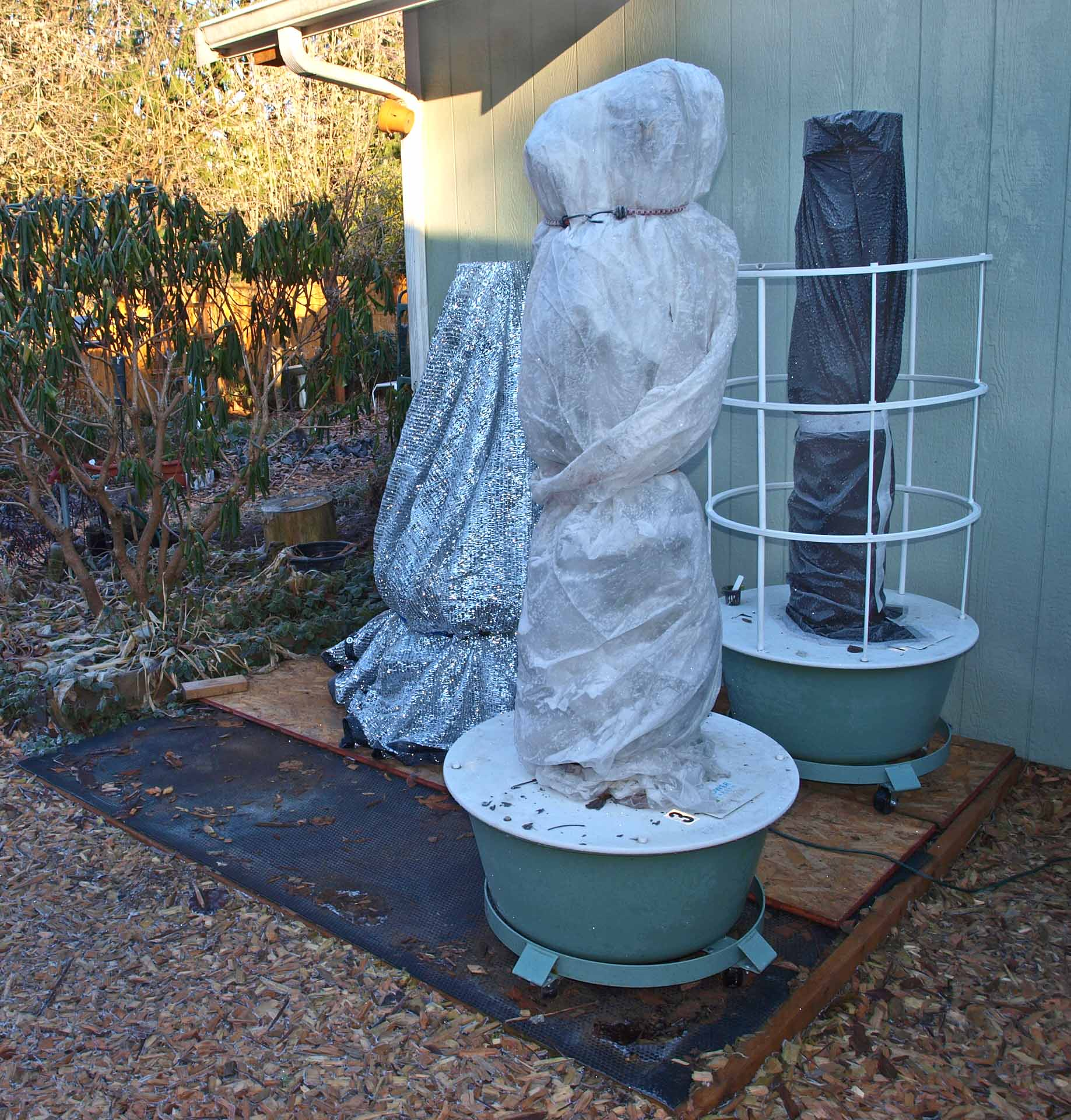 Protecting Potted Container Plants In Winter Caroldoey