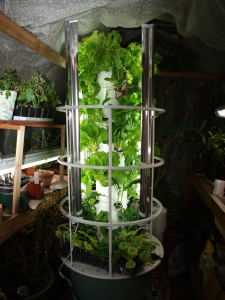 Photos of my Tower Garden producing food that is feeding us this winter.