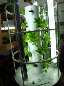Three weeks from previous picture of the Tower Garden, taken 3-7-2014.