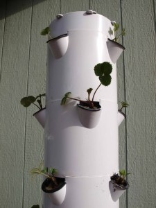 Small plants are better than mature plants when planting your Tower Garden.
