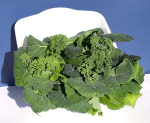 Six varietes of fresh picked kale from my Tower Garden in a pan.