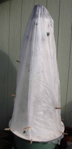 Tower Garden covered with row cover fastened  with cloths pins.