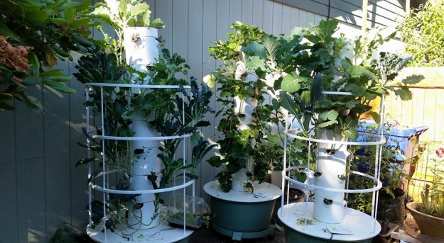 Photo of 3 Tower Gardens in my backyard.