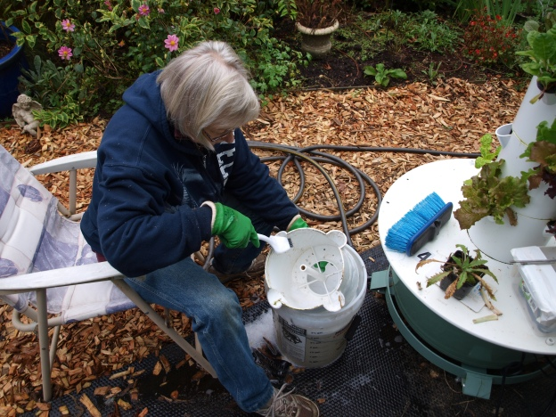 Photo of Linda cleaning a Tower Garden