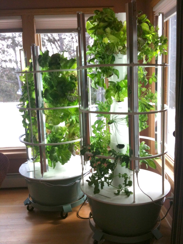 Photo of two Tower Gardens inside a house.