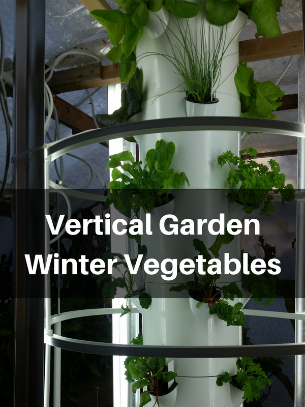 Growing Vertical Garden Winter Vegetables