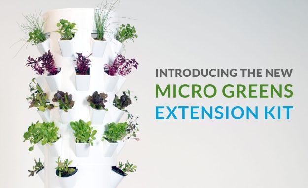 Microgreens-Growing-Microgreens